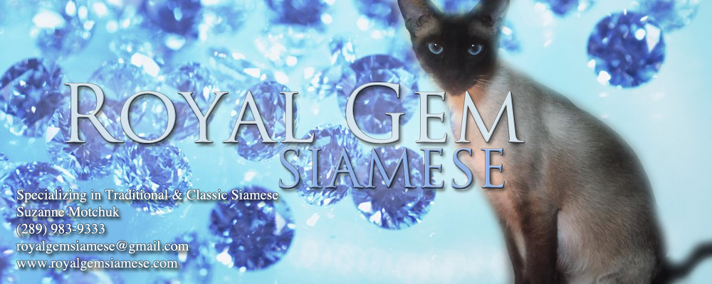 Royal Gem Siamese